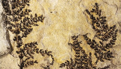 These Are the Oldest Known Flowers in the World