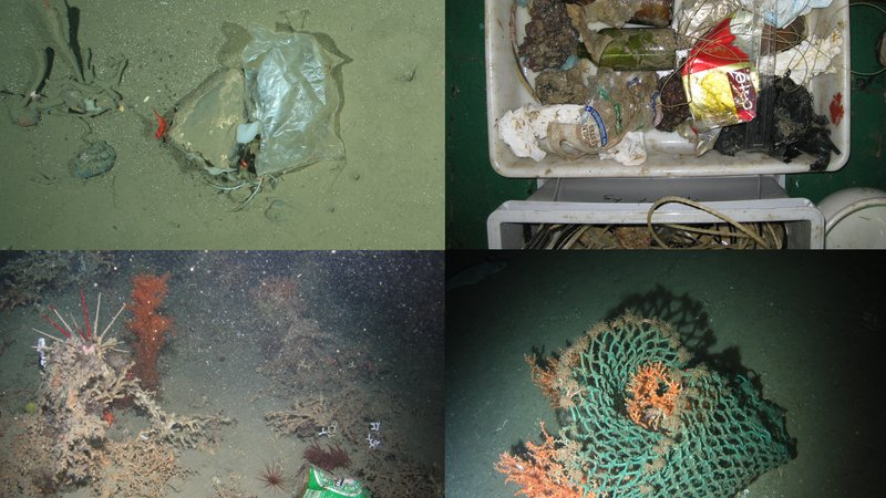 Surveys off the coast of Europe revealed all kinds of human trash, including plastic bags (upper left and lower right), beer cans (lower left) and glass bottles (upper right).