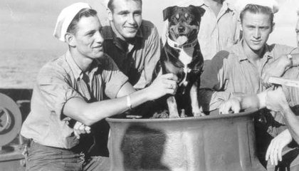 The Adorable and Heroic Animals of the Museum of Maritime Pets