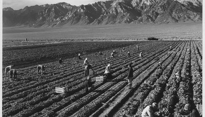 View Daily Life in a Japanese-American Internment Camp Through the Lens of Ansel Adams