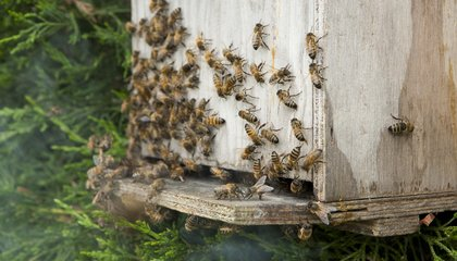 The Federal Government Now Has an Official Save-the-Bees Task Force