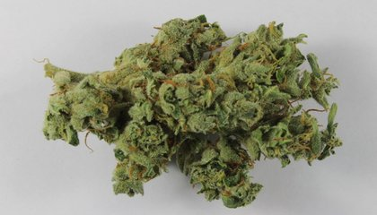 Modern Marijuana Is Often Laced With Heavy Metals and Fungus