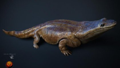 Hundreds of Car-Sized Fossil Amphibians Found in a Mass Grave