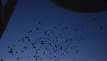 A Giant Flock of Pigeons Is Lighting up New York's Night Sky