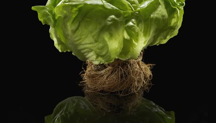 Fujitsu is Growing the Most Technologically Advanced Lettuce Ever