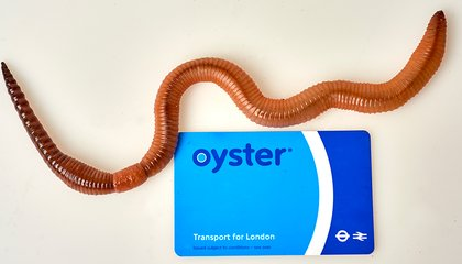 R.I.P., Dave the U.K.'s Largest Earthworm