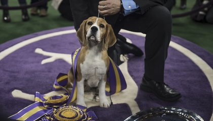 How to Prep Your Pooch to Win Best in Show