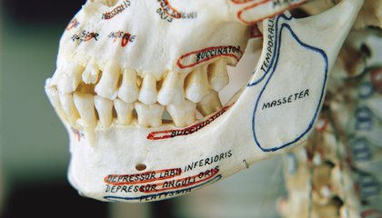 Before Agriculture, Human Jaws Were a Perfect Fit for Human Teeth