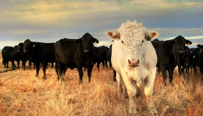The Fourth Case of Mad Cow Disease Ever Reported in the U.S. Was Just Confirmed