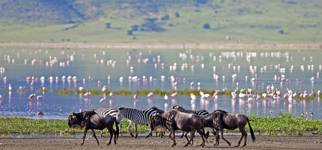 Wildebeest, zebras, and flamingoes at Ngorongoro Crater