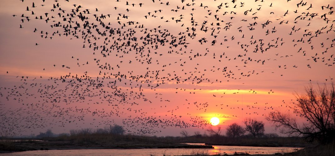 Caption: The Best Places in the U.S. to See Spring's Migrating Birds
