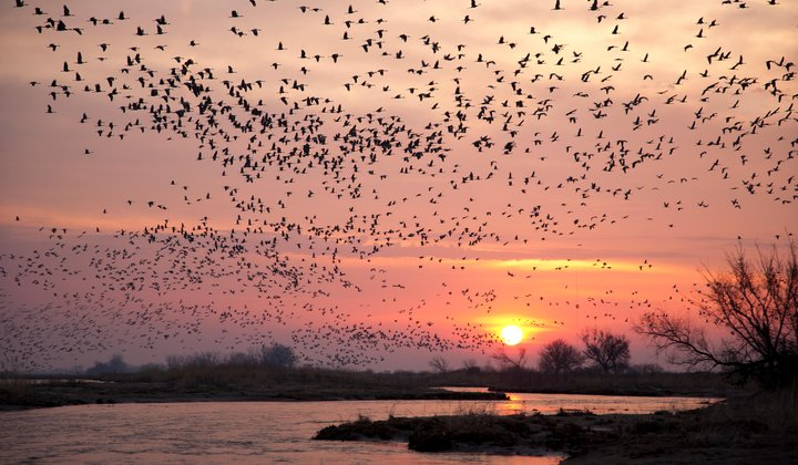 The Best Places in the U.S. to See Spring's Migrating Birds