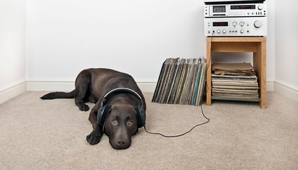 Vinyl Producers Can't Keep Up With Hipsters' Demands