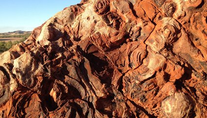 Life and Rocks May Have Co-Evolved on Earth