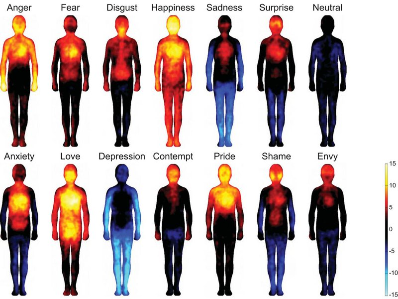 Bodily maps of emotion developed by the researchers.