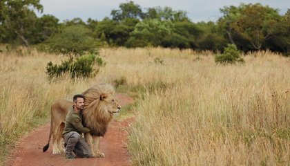 "What Makes the ""Lion Whisperer"" Roar?"