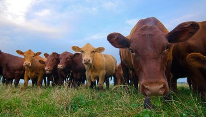 There Might Be a Way to Eat More Meat Without Ruining the Planet