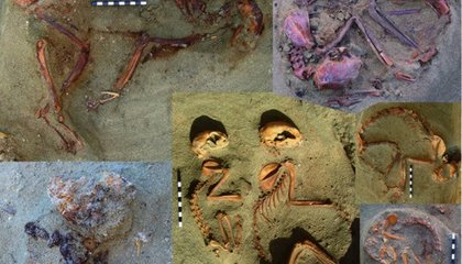 Archeologists Discover Nearly 2,000-Year-Old Pet Cemetery in Egypt