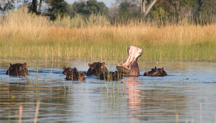 tailor-made-travel-botswana