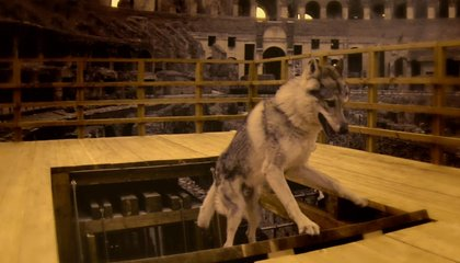 A New Recreation Shows How Ancient Romans Lifted Wild Animals Into the Colosseum