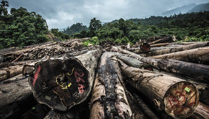 In Borneo's Ruined Forests, Nomads Have Nowhere to Go