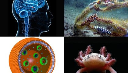 Ten Cool Science Stories You May Have Missed in 2014