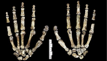 New Fossil Discovery May Change What We Know About Human Evolution
