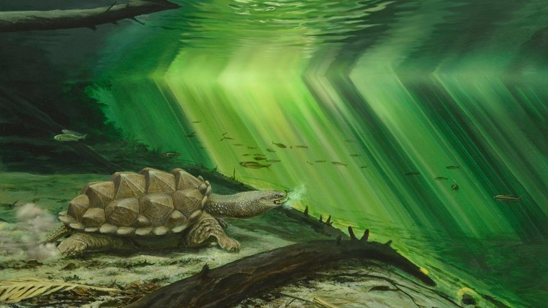 A reconstruction of how Platychelys oberndorferi looked in life.