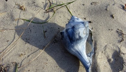 Beach Tourists Who Collect Shells May Be Harming the Environment