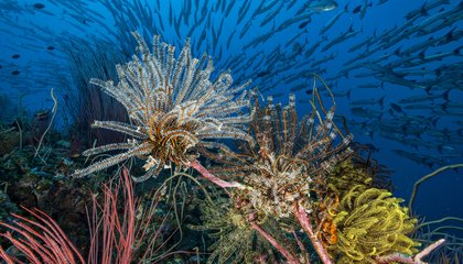 Corals And Fish Can Tell a Bad Reef When They Smell It