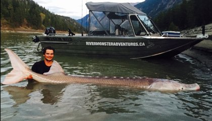 Canadian Fishermen Caught Fabled 650-Pound, Century-Old Sturgeon