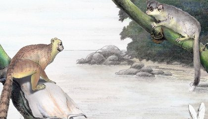 Out of Asia: How Monkey and Ape Ancestors Colonized Africa