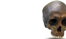 A replica of the skull of Robert Kennicott