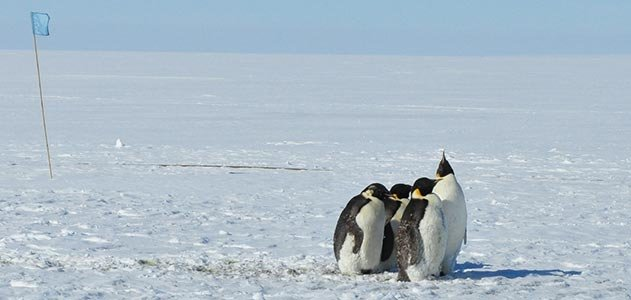 Antarctica penguins