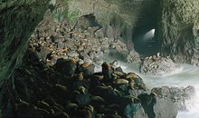 Sea lion caves in Florence