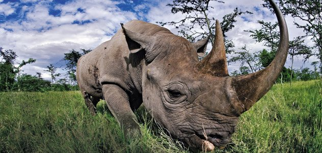 an introduction to the nature and the five types of rhinoceros on earth Have you ever questioned yourself do i know this   different types of  enough to move a person from the earth to the moon five times a day.