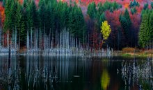 Fall Foliage on Cuejdel Lake, Neamt, Romania