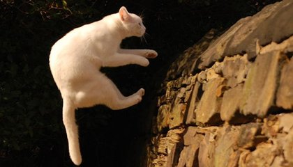 Do Cats Always Land on Their Feet? (and Other Absurd Scientific Studies)