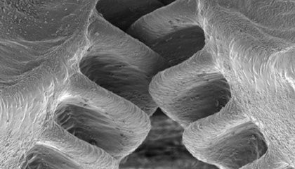 This Insect Has The Only Mechanical Gears Ever Found in Nature