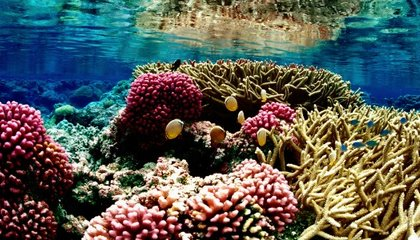 Ocean Acidity Rivals Climate Change As Environmental Threat