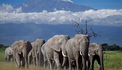 Why a Tanzanian Village Chased Six Elephants Off a Cliff