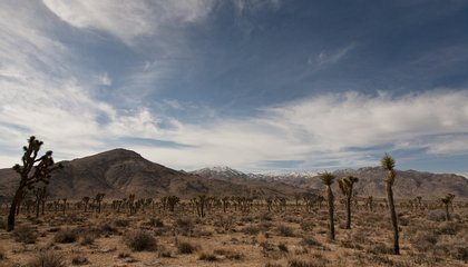 There's a Secret Pool in the Mojave Desert