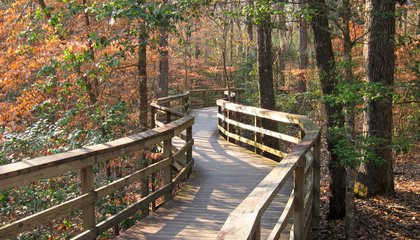 Congaree National Park Wilderness