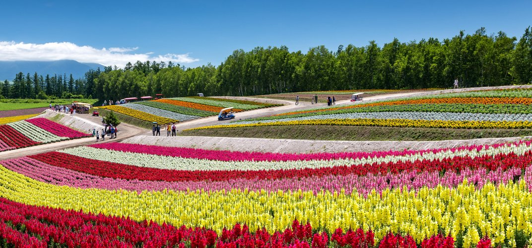 Caption: 12 Mesmerizing Places to Watch Flowers Bloom