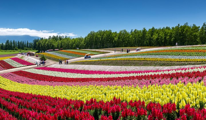 12 Mesmerizing Places to Watch Flowers Bloom