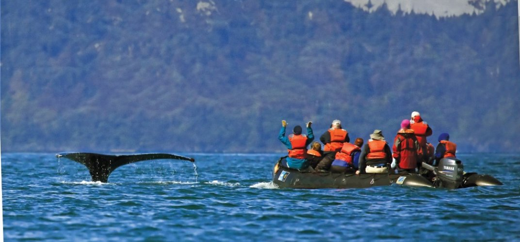 Travelers watching a diving Humpback whale up close.  Credit: Lindblad Expeditions