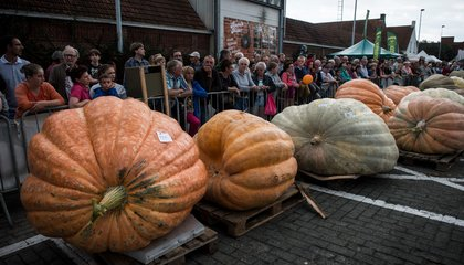 The Secret to Growing the World's Largest Pumpkin