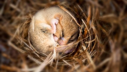Can Humans Ever Harness the Power of Hibernation?