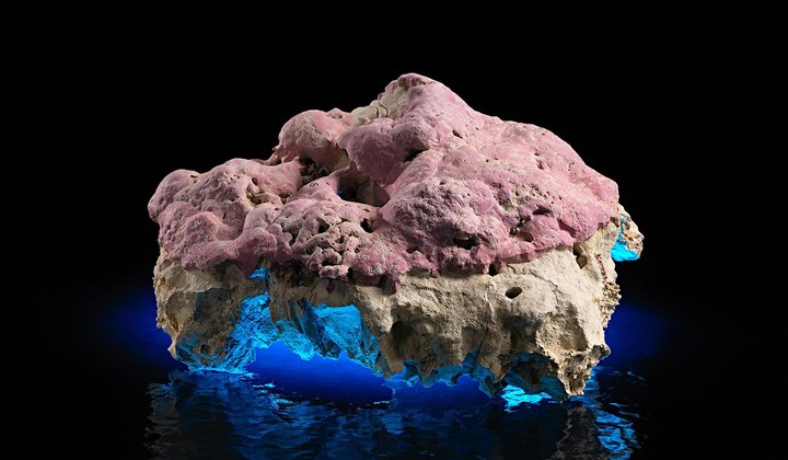 This Stunning Pink Coralline Algae Holds Secrets