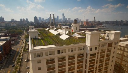 New York Could Grow All Its Own Food